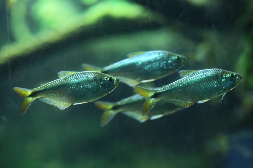 23825865_fish-with-eyes0jpg