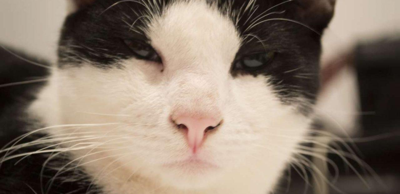 Kedinin dilini anlamaya çalışmak