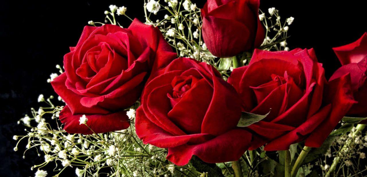 Dünyanın en güzel gülleri