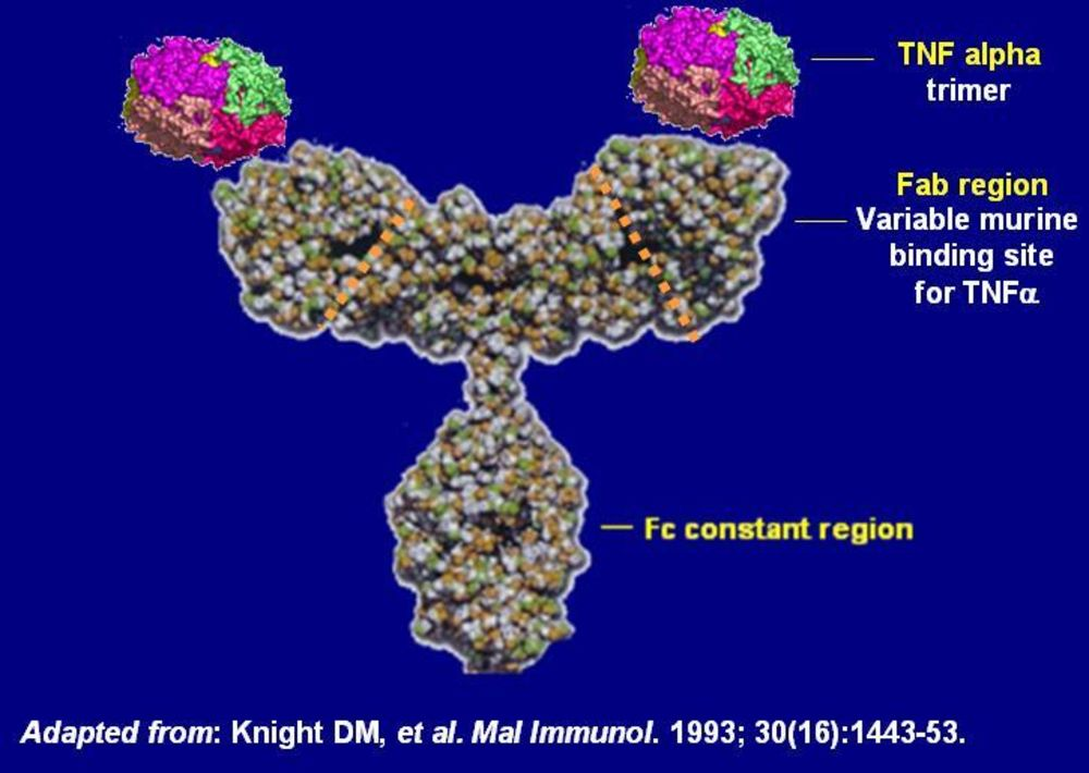 infliximab_structure2