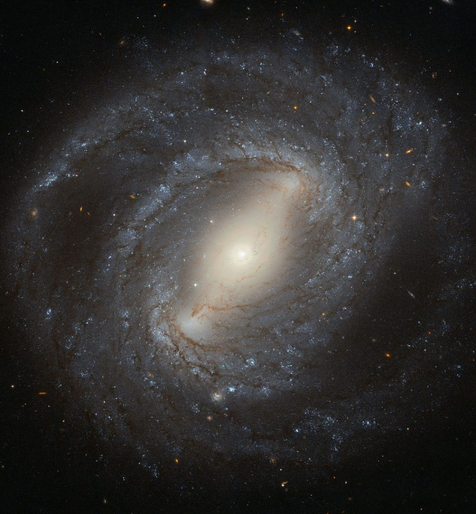 Discovered in 1784 by the German–British astronomer William Herschel, NGC 4394 is a barred spiral galaxy situated about 55 million light-years from Earth. The galaxy lies in the constellation of Coma Berenices (Berenice's Hair), and is considered to be a member of the Virgo Cluster.  NGC 4394 is the archetypal barred spiral galaxy, with bright spiral arms emerging from the ends of a bar that cuts through the galaxy's central bulge. These arms are peppered with young blue stars, dark filaments of cosmic dust, and bright, fuzzy regions of active star formation. At the centre of NGC 4394 lies a region of ionised gas known as a LINER. LINERs are active regions that display a characteristic set of emission lines in their spectra— mostly weakly ionised atoms of oxygen, nitrogen and sulphur.  Although LINER galaxies are relatively common, it's still unclear where the energy comes from to ionise the gas. In most cases it is thought to be the influence of a black hole at the centre of the galaxy, but it could also be the result of a high level of star formation. In the case of NGC 4394, it is likely that gravitational interaction with a nearby neighbour has caused gas to flow into the galaxy's central region, providing a new reservoir of material to fuel the black hole or to make new stars.