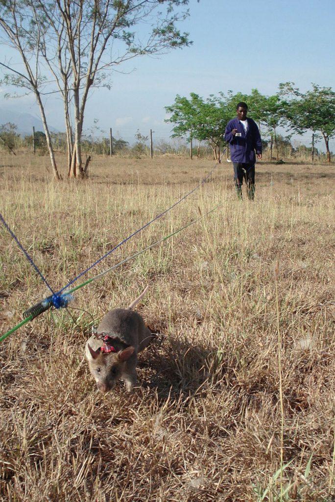 800px-landminerat