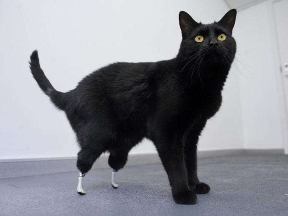 bioniccat