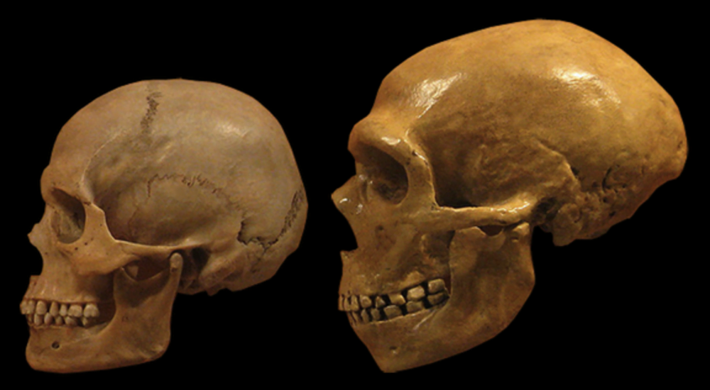 left_facing_neanderthal_human_cropped_black_background