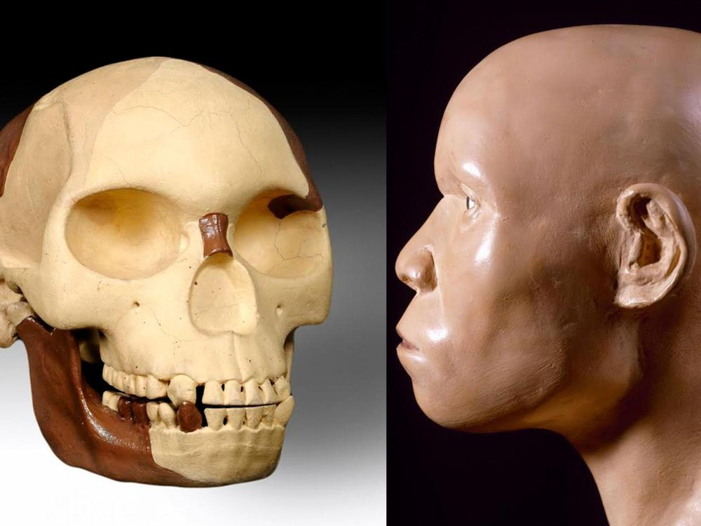piltdown-man-reconstruction-trustees-of-the-natural-history-museum