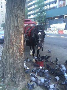 Güvercinler bu atın kovasına gelmişler o da yeminin bir kısmını onlar için bırakmış