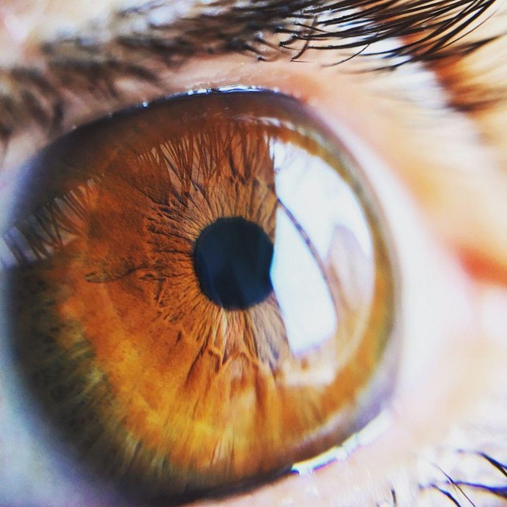 cornea_eye
