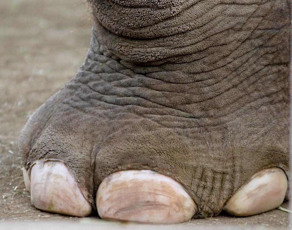 elephant_foot_0