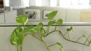 Ofisinizi biraz yeşillendirmek, hava kalitesinde büyük bir fark yaratabilir.