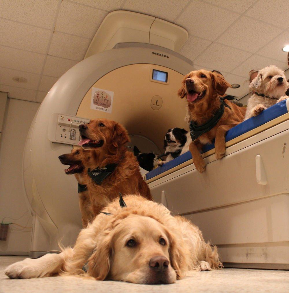 Görsel 1:  Köpekler tarayıcının yanında uzanıyorlar. 13 köpek test boyunca tarayıcının içerisinde hareketsiz yatarak durmak üzere eğitildi.