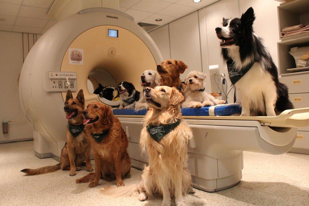 İyi çocuk kimdir? Eğitimli köpekler çalışmada kullanılan fMRI makinesinin yanında poz verdiler.