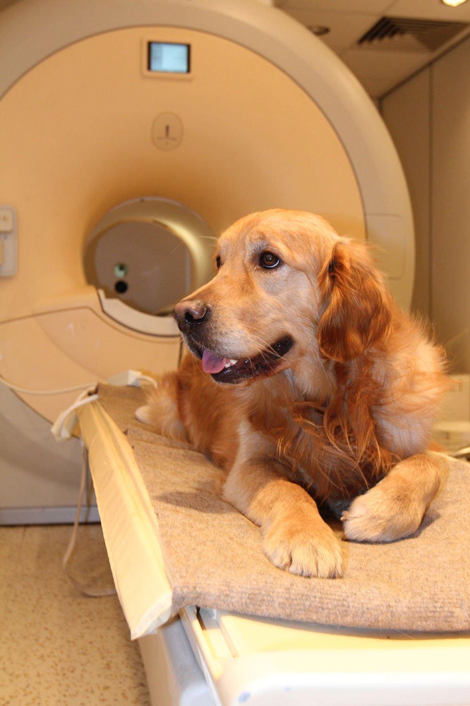 Tarayıcı için hazır Çalışmada kullanılan köpeklerin ailelerinin tümü bu iş için gönüllü oldu