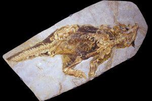 Psittacosaurus fosili