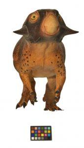 """Psittacosaurus'un önden görüntüsü Araştırmacılar yüzdeki gölgelendirmenin memeli hayvanlarda görülen """"maske""""ye benzediğine ancak öneminin bilinmediğine dikkat çekiyor"""