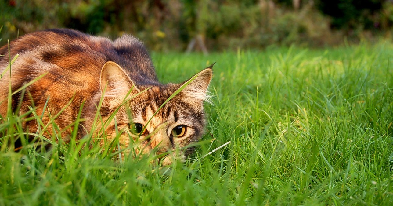 How to repel cats from yard