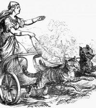 İskandinav tanrıçası Freyja arabasını kedilere çektiriyor. Vikingler muhtemelen tanrıçanın yolunu izleyerek, gemilerinde kedilerle seyahat ettiler