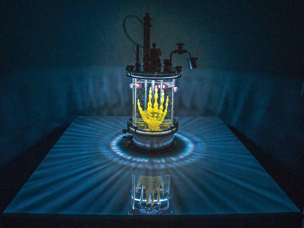 Laboratuvar Yapımı El Amy Karle, kök hücrelerin bu yapı üzerinde zamanla gelişeceğini ve kemikleşeceğini umuyor. Elin yapısındaki gözeneklerin boyutları sadece 0.45 mm.