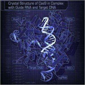 CRISPR yapısına bakıldığında kompleks gelebilir, fakat genetik koda ekleme ve çıkarmak yapmak için basit ve oldukça hassas bir yol. Çinli araştırmacılar bu tekniği ilk kez insanlarda denediler.