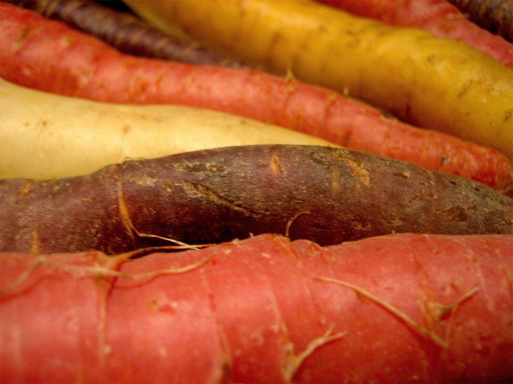 Mor havuçlarda, vücudumuzda A vitaminine dönüştürülen alfa ve beta karotenler, turuncu havuçlara kıyasla iki kat daha fazla bulunuyor.