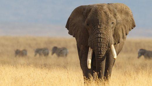 Filler Çok Nadiren Kanser Oluyor ve Nihayet Bunun Sebebini Biliyor Olabiliriz
