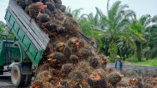 Çevreyi Kurtarmak İçin Palmiye Yağını Boykot Etmeli Miyiz?