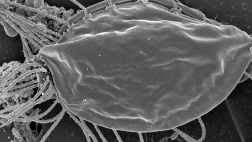 Şaşırtıcı Bir Mikrop Keşfi, Yaşam Ağacımızın Yepyeni Bir Dalını Ortaya Çıkardı