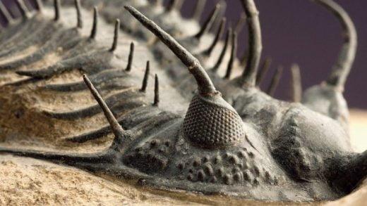 Tarihteki En Ölümcül Kitlesel Yok Oluşta, Denizdeki Canlıları Öldüren Şeyi Artık Biliyoruz