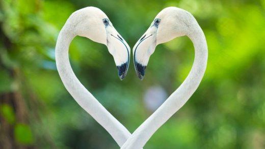 Bilim İnsanları, Tek Eşliliğin Evrensel 'Genetik Formülünü' Belirlemiş Olabilir