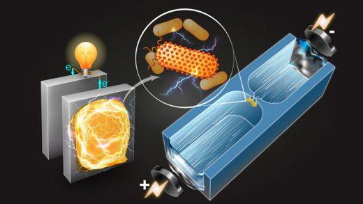 Bilim İnsanları, Elektrik Üreten Bakterileri Bulmamızı Kolaylaştıracak Bir Yöntem Keşfetti