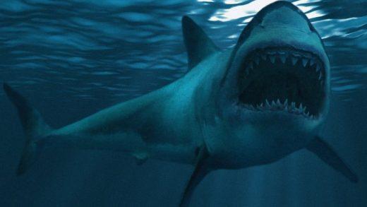 Dev Megalodon'u Öldüren Canlı, Bugün Hâlâ Okyanuslarda Yaşıyor Olabilir