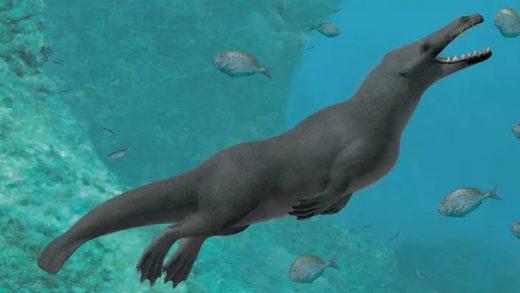 Balinaların Dört Ayaklı Atalarının Keşfedilmesi: Kara ve Deniz Arasındaki Evrimsel Bir Bağlantı