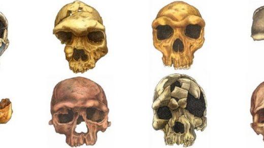 Yeni Bir Makale, İnsan Yüzünün Şaşırtıcı Evrimini Ortaya Seriyor