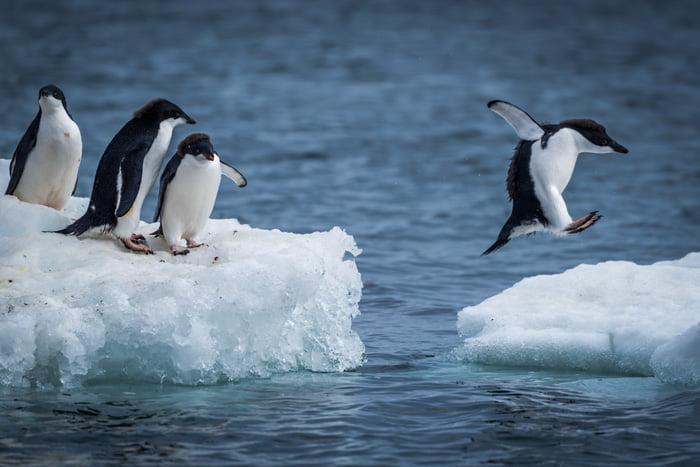 Kutup ayıları penguenlerin tadını bilmezler. Çünkü doğal yaşamda ikisi neredeyse hiçbir zaman bir arada bulunmaz. Penguenler yalnızca Antarktika'da yaşar.