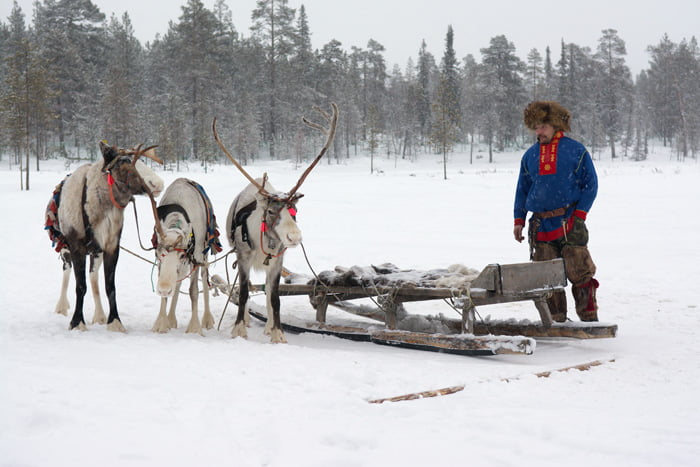 Folklorik kostümü ile Sami ve Ren Geyikleri