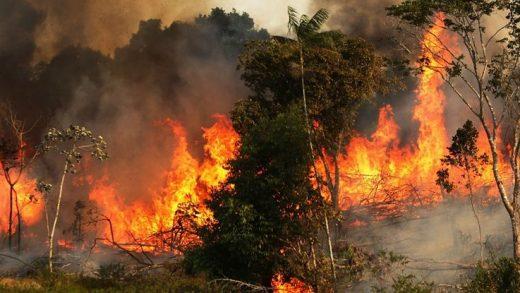 Amazon Ormanları Rekor Miktarda Yanıyor ve Oluşan Tahribat Uzaydan Görülebiliyor