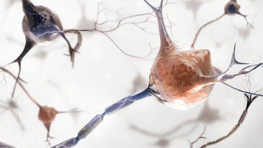 Bilim İnsanları, Farelerin Beyinlerinde Anksiyetenin Fiziksel Kaynağını Belirledi