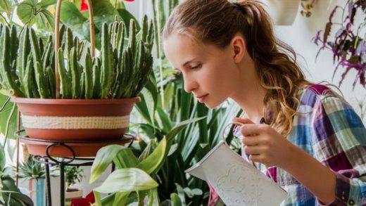 Dev İnceleme, Ev Bitkilerinin Evinizdeki Havayı Aslında 'Temizlemediğini' Doğruluyor
