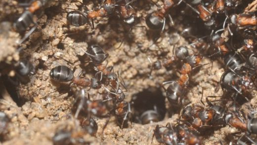 Sovyet Nükleer Sığınağında Yıllarca Hapsolan Karıncalar, Ürkütücü Bir Yöntemle Hayatta Kalmış
