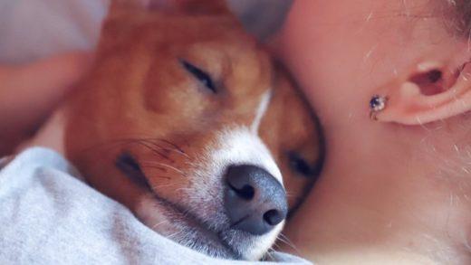 Köpeklerin Duygularını Tanıma Beceriniz, Nerede Yetiştiğinizi Gösteriyor Olabilir