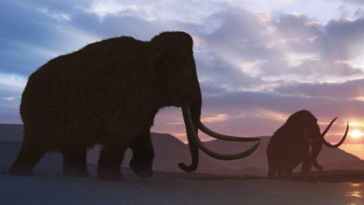 Antik Genler, Dünya Üzerindeki Son Mamutların Hastalıklarla Boğuştuğunu Gösteriyor