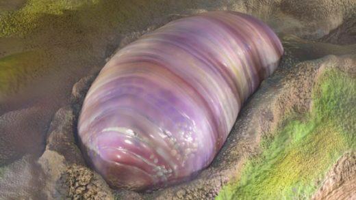 Günümüzdeki Birçok Hayvanın En Eski Atası Ortaya Çıkmış Olabilir
