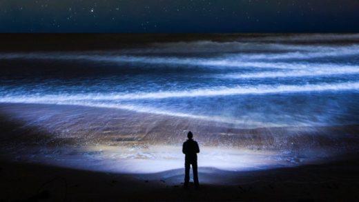 Her Gün, Gezegen Üzerindeki En Büyük Kitlesel Göç Gerçekleşiyor ve Biz Görmüyoruz