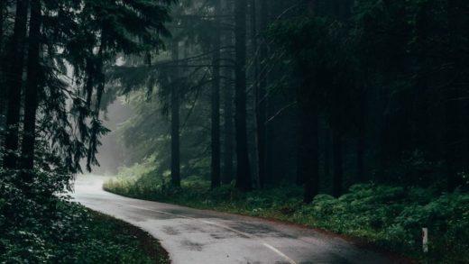 Yağmur Kokusunu Seviyor Musunuz? Bu Kokunun Ardında Gizli Bir Güdü Yatıyor